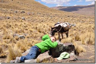 Trek Cerro Condoriri (27)