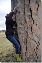 Bosque de Piedras (8)