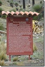 Route Huaraz -Puya Raimondi (12)