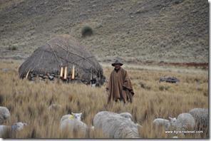 Route Huaraz -Puya Raimondi (16)