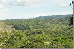 Amazonie - Rio Napo (40)