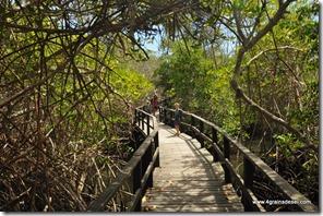Galapagos - Isla Isabela - Concha y Perla (2)