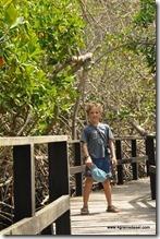 Galapagos - Isla Isabela - Concha y Perla (3)
