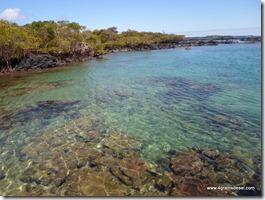 Galapagos - Isla Isabela - Concha y Perla (9)