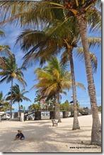 Galapagos - Isla Isabella - Malecon (3)