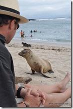 Galapagos - Isla San Cristobal - La Loberia (10)