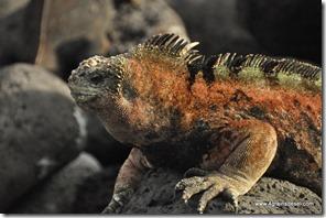 Galapagos - Isla San Cristobal - La Loberia (14)