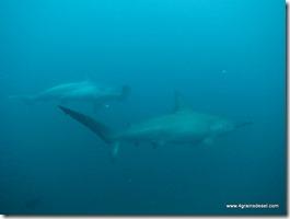 Galapagos - Isla San Cristobal - Plongée Leon Dormido (5)