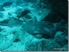 Galapagos - Isla San Cristobal - Plongée Leon Dormido (6)