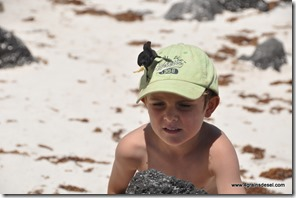 Galapagos - Isla San Cristobal - Puerto Chino (16)
