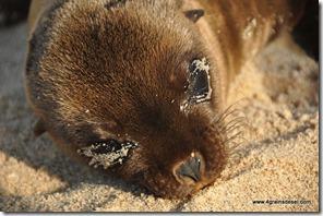 Galapagos - Isla San Cristobla - Playa Mann (11)