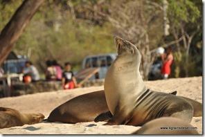 Galapagos - Isla San Cristobla - Playa Mann (2)