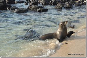 Galapagos - Isla San Cristobla - Playa Mann (9)