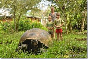 Galapagos - Isla Santa Cruz - Tortues Géantes (4)