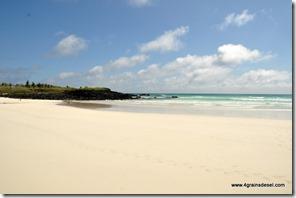 Galapagos - Isla Santa Cruz - Tortuga Bay (5)