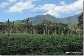 Costa Rica - Bijagua (33)