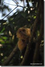 Costa Rica - PN Manuel Antonio (18)