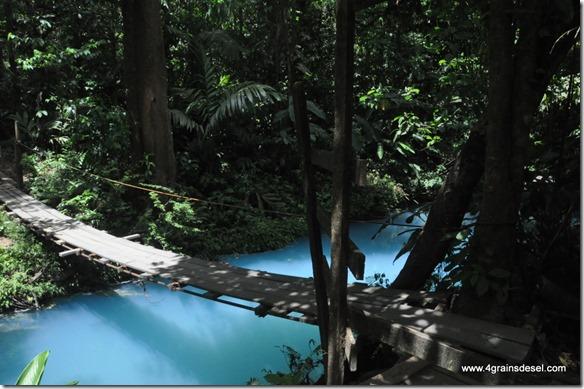 Costa Rica - PN Tenorio (49)