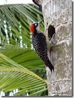Costa Rica - Retour Punta Uva (35)
