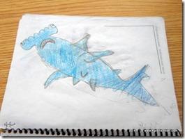 Requin Marteau 2