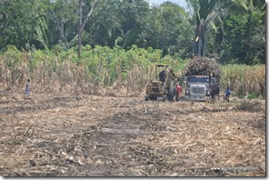 Belize - Route Corozal (8)