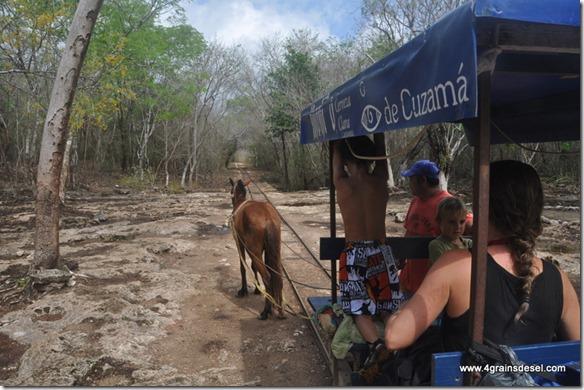 Mexique - 3 Cenotes de Cuzama (23)