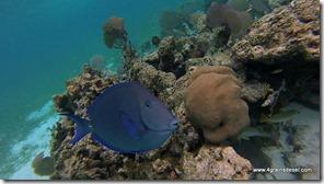 Belize - Snorkel Caye Caulker (12)