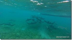 Belize - Snorkel Caye Caulker (18)