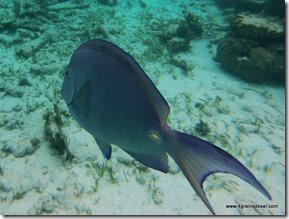 Belize - Snorkel Caye Caulker (1)