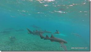 Belize - Snorkel Caye Caulker (23)