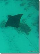 Belize - Snorkel Caye Caulker (29)