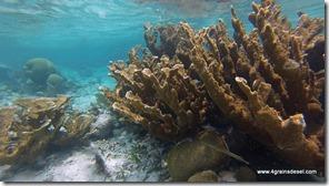 Belize - Snorkel Caye Caulker (30)