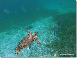 Belize - Snorkel Caye Caulker (44)