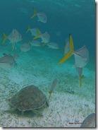Belize - Snorkel Caye Caulker (49)