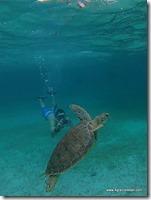Belize - Snorkel Caye Caulker (50)