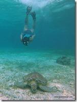 Belize - Snorkel Caye Caulker (54)
