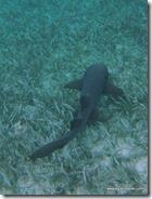 Belize - Snorkel Caye Caulker (7)