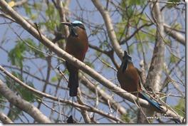 Mexique - 3 Cenotes de Cuzama (20)