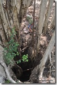 Mexique - 3 Cenotes de Cuzama (41)