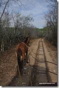 Mexique - 3 Cenotes de Cuzama (9)