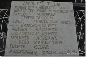 Mexique - Arbol de Tule (16)