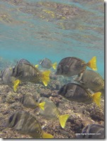 Mexique - Playa Agustin (21)