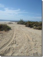 Mexique - Baja California - Los Barriles (1)