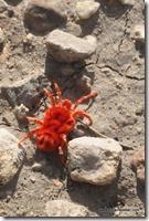 Mexique - Reserva de Tehuacan Cuicatlan (31)