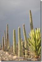 Mexique - Reserva de Tehuacan Cuicatlan (36)