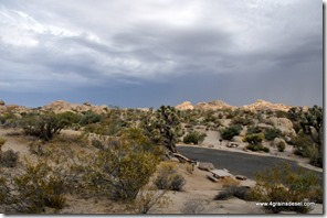 Usa - Californie - Joshua Tree NP (45)
