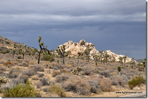 Usa - Californie - Joshua Tree NP (51)