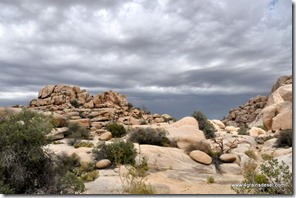 Usa - Californie - Joshua Tree NP (53)