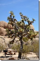 Usa - Californie - Joshua Tree NP (6)