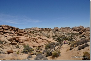 Usa - Californie - Joshua Tree NP (8)